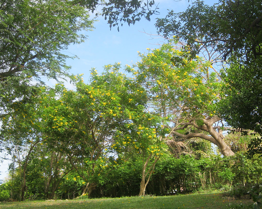 golden grove garden